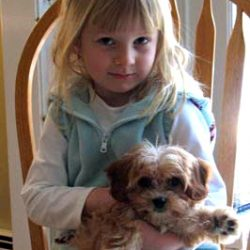 Cavanese Puppy sitting with a young girl