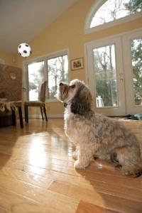 Soccer.jpg.w300h452