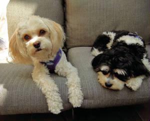Tucker & Sadie