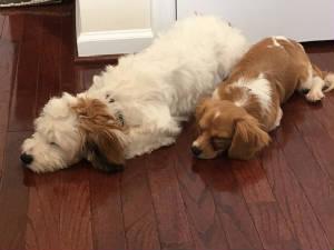 Enzo & Beauregard