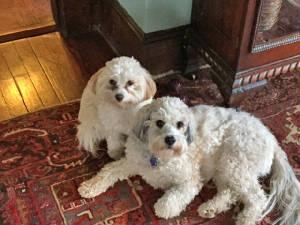 Hammie & Tiggy